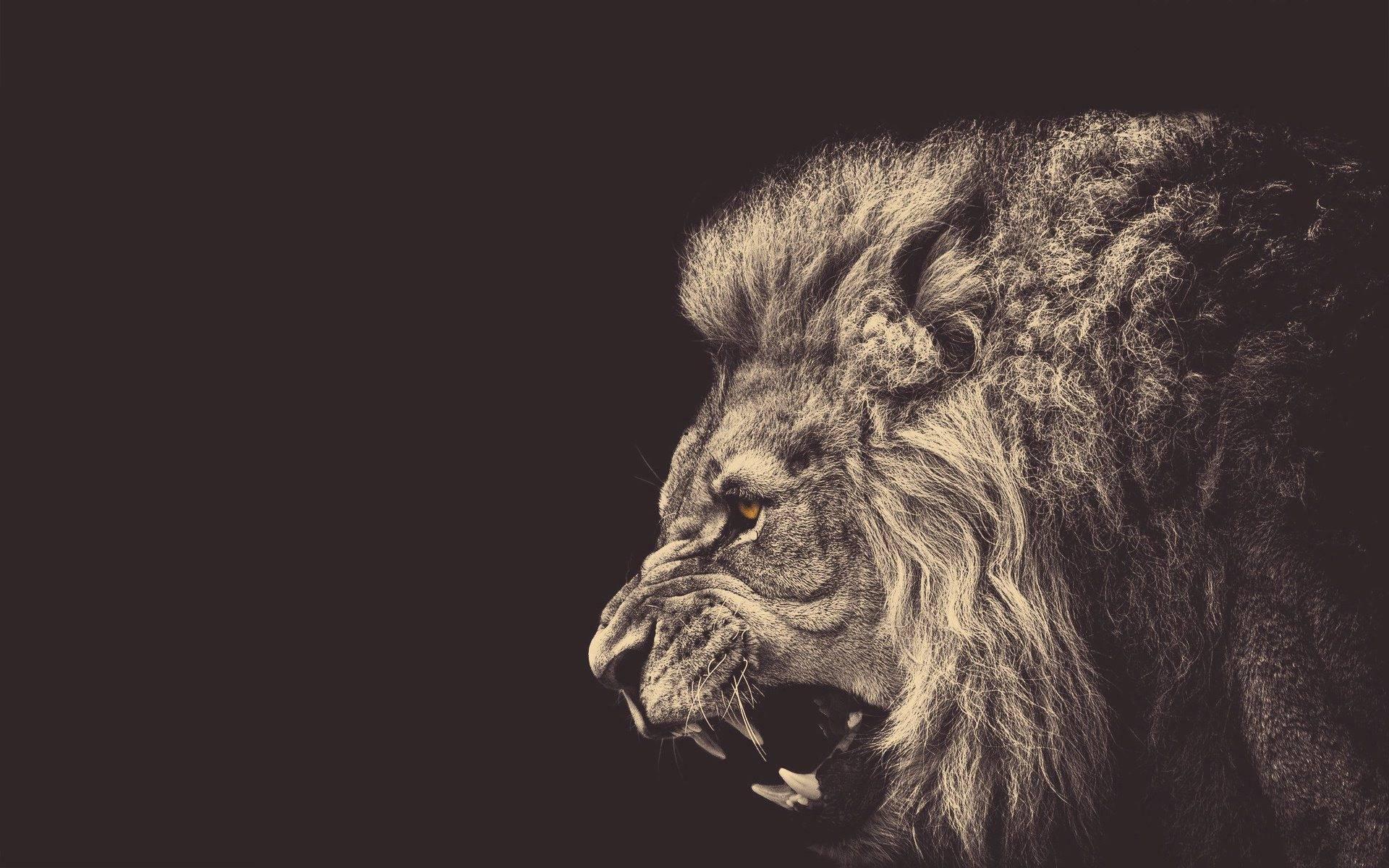 """É um """"leão digital"""" por dia, às vezes eu quero até mais"""